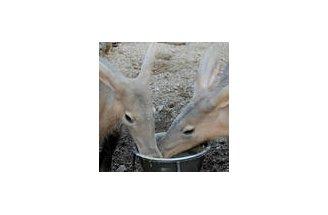 Aardvarks-Kiyo-&-Misha